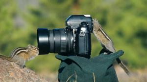 eastern American chipmunk Tamias striatus, duo exploring a camera, USA, Wyoming, Yellowstone NP