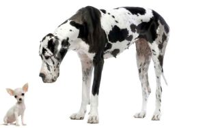 perro-grande-perro-pequeño1