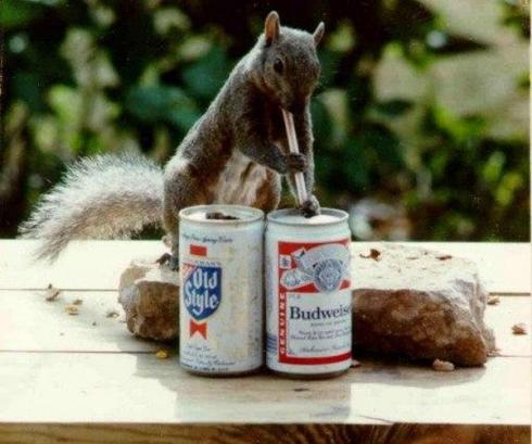 Most Funny Drunk Animals