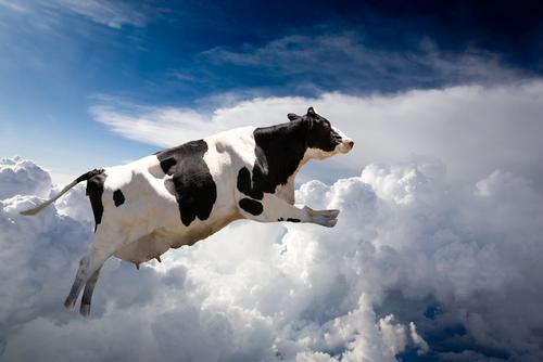 cow-dream