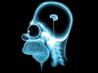 homer-s-brain-the-simpsons-15415662-400-300