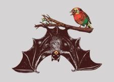 threadless-bat-and-robin