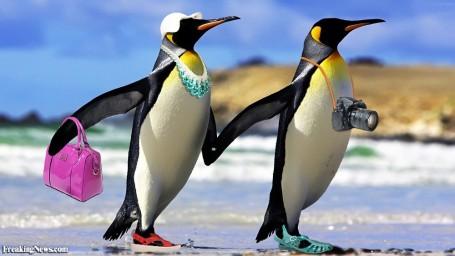 Penguin-Tourists-122467